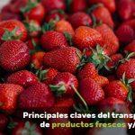transporte marítimo de productos frescos y perecederos
